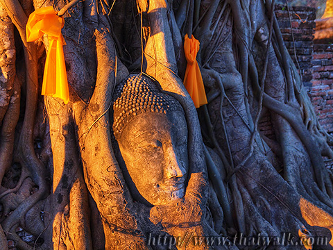 The Buddha head in tree roots part.2