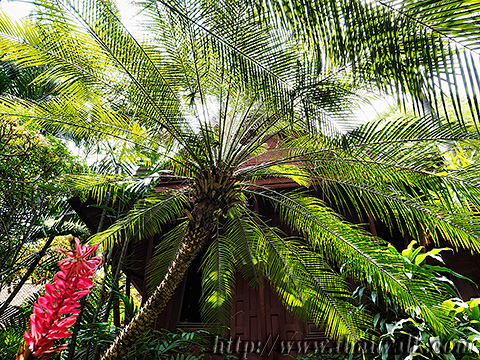 The Jim Thompson House - the palm-tree